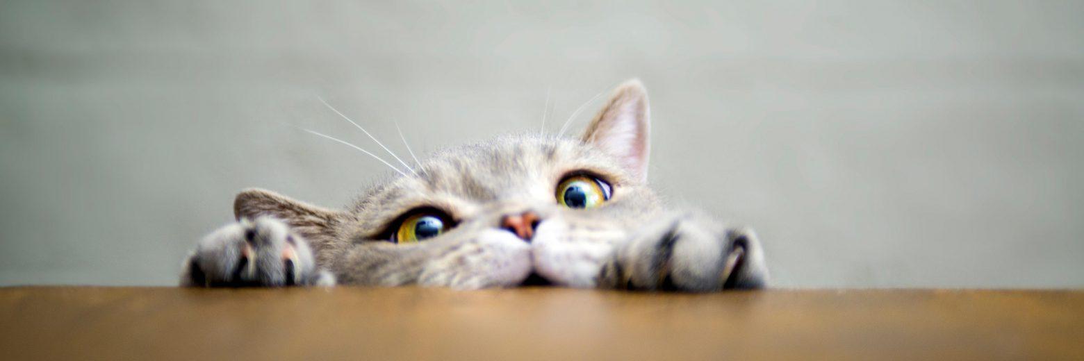 Katzen haben ein gutes Gehör - Signia Hörgeräte