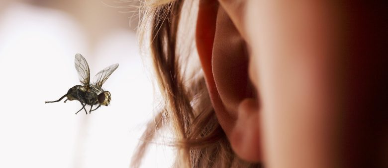 Your ears are extremely delicate, and damage to the inside can seriously